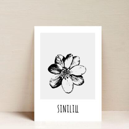 poster eesti sinilill lilleposter fotoposter