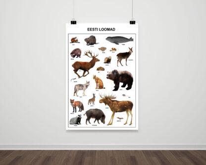 Poster eesti loomad
