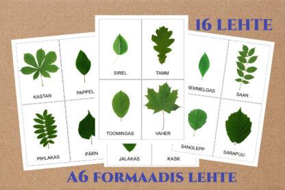 eesti puud