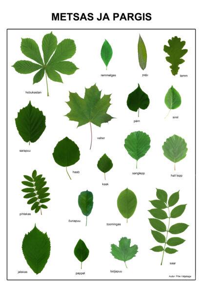 eesti puud puude ja põõsaste lehed