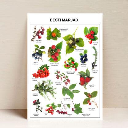poster eesti marjad
