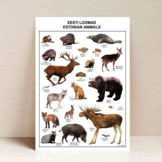 Eesti loomad