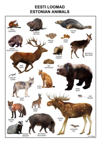 loomad eesti metsades