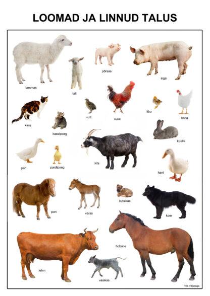 loomad ja linnud talus