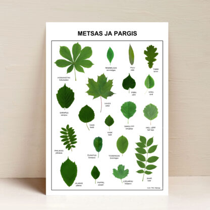poster metsas ja pargis