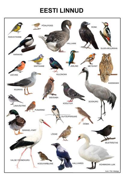 EEsti linnud