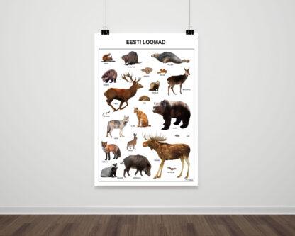 loomad eesti metsas