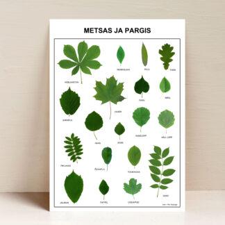 lehed metsas ja pargis