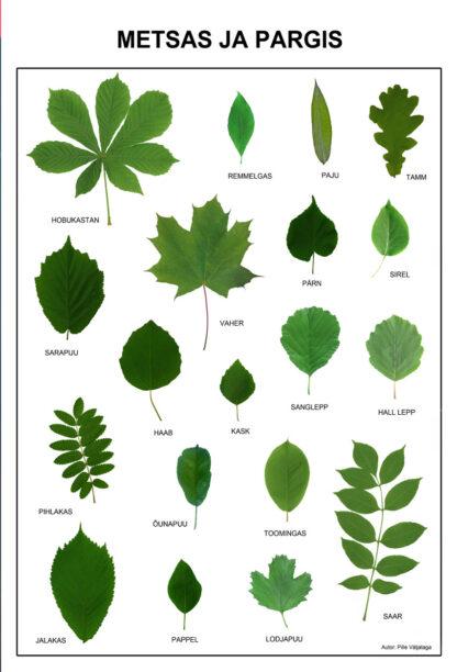 eesti puud ja põõsad puulehed