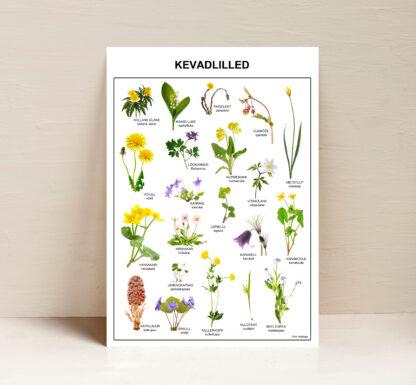 poster eesti kevadlilled